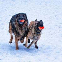 Come - the most valuable word we can train our dogs