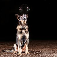 Training Dogs in Victoria, BC